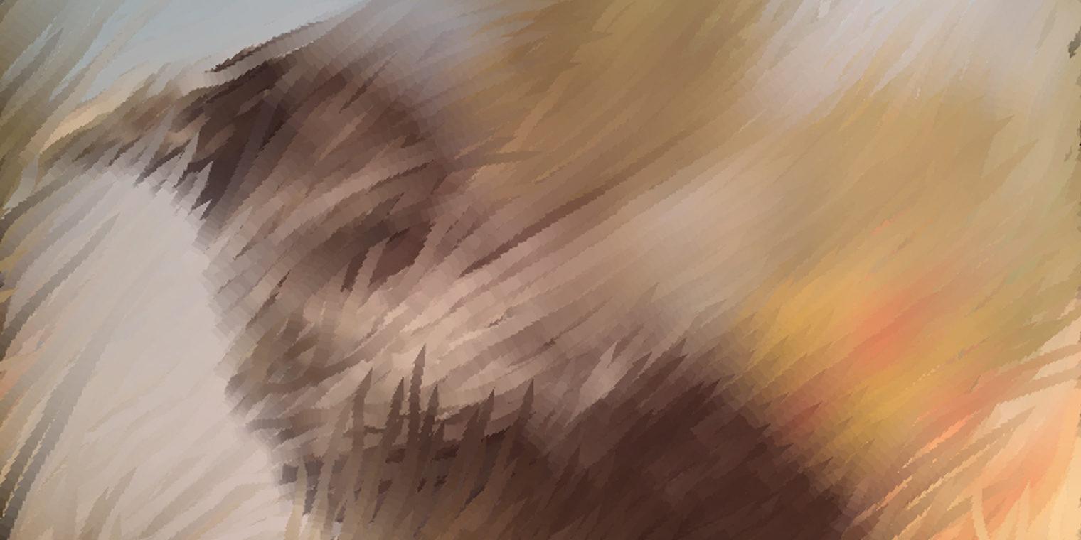 bird_04